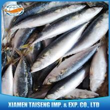 Frozen Seafood Pacific Mackerel Scomber Japonicus