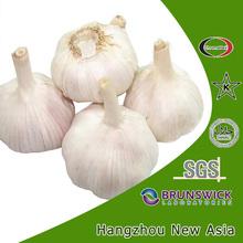 garlic powder ingredients
