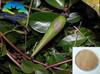 Main Product Hot sale 15% OFF Gymnema Sylvestre Extract Gymnemic acid