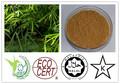 Total flavona 10% bambu extrato de folhas