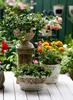 rose delegent flower vase for garden with elegant style