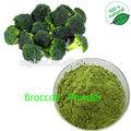 Gmp 100% organico broccoli sulforafano in polvere/broccoli germoglio polvere/germogli di broccoli in polvere