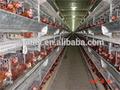 h-- اكتب موضوع-- الطبقة طبقة قفص الدواجن المعدات الزراعية للبيع