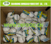 pure white Fresh Garlic for Europe market 6.0 with carton package