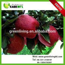 Fresh Apple New Crop