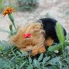 Hottest nice shape fur animal decor cat fur toy sleeping kitten