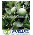 10%- 99% synéphrine naturel extrait d'orange amère/médecine d'herbe naturelle immature orange amère