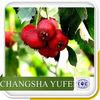 Hawthorn fruit p.e., hawthorn fruit powder, hawthorn p.e.