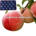 Plástico atóxico dispoable embalagens blister de alimentos recipiente para o tomate, morango, frutos cereja