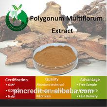 Chinese Herbal Polygonum Multiflorum Polygonum Multiflorum Thunb