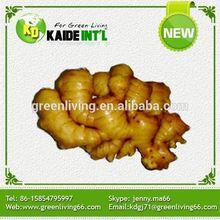 Fresh Chinese 100g Ginger Mesh Bag Packing