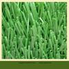 popular Zhejiang's synthetic grass soccer field