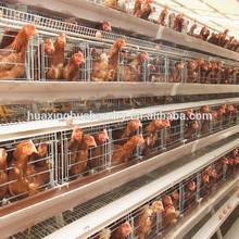 metal layer chicken coop for sale/wood chicken coop