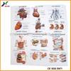 PVC Embossed Sheet 3D Embossed Human Anatomy Charts