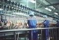 En acier inoxydable capacité différente poulet volaille machines de l'usine de traitement