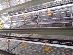 Chicken Breeding Cage sells in Nigeria