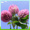 100% Natural red clover extract isoflavone/red clover extract formononetin/red clover flower extract