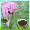 High Quality 8% 20% Isoflavones Red Clover Powder Extract