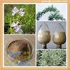 Supply Organic Rosemary Extract Rosemary Oleoresin