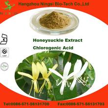 China plant extract honeysuckle flower extract Chlorogenic acid