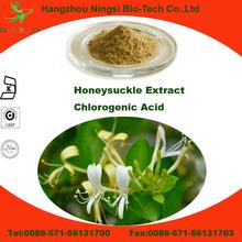 China herb extract honeysuckle flower extract Chlorogenic acid