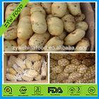 New Organic Fresh Potato Hot in India