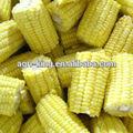 Nuevo chino cultivos iqf congelados& mazorcas de maíz dulce
