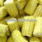 new crop chinese IQF & Frozen bulk sweet corn