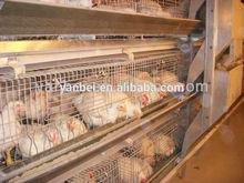9lcdr-3168 sıcak galvanizli h tipi otomatik broiler kafes sistemi