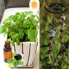 New Seasons Essential Oils Spearmint Oil Suppliers In China For Export