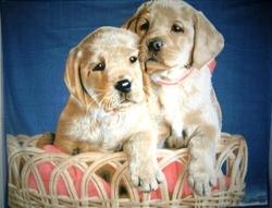 2014 Xinbo Two Dog Printed 100-Polyester-Polar-Coral-Fleece-Baby-Blanket