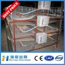 Anping gaiola de galinha, gaiolas em bateria galinhas poedeiras, equipamentos de avicultura( fabricação)