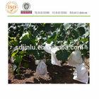 grape nursery paper bag