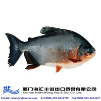 Frozen fresh pacu fish for sale