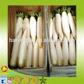 Cinese grado di fresca biologica ravanello bianco, carota bianca, daikon per l'esportazione