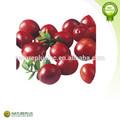 Extrato de cranberry, suco de fruta concentrado, suco de fruta