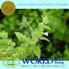 100% Natural Lemon Balm Leaf Extract/Lemon Balm Leaf Extract Powder/Lemon Balm Leaf Powder