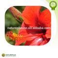Cardiovasculaires& cerveau poudre d'hibiscus/fleur d'hibiscus extrait/hibiscus extrait