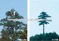 Todos os tipos de palmeiras 30 M