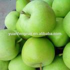 2014 fresh green Gala apple , good quality .