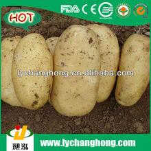 [HOT]holland seed potato/holland potato seeds