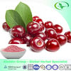GMP Manufacturer Supply Frozen Cherry Fruit Extract Powder with Low Price,17%,25% Vitamin C
