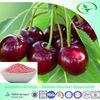 Frozen Cherry Fruit Extract Powder with Low Price,17%,25% Vitamin C