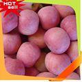 Nova chegada doce delicioso nomes de frutas com fotos