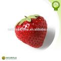 Poudre de fraise, fraises lyophilisées en poudre, saveur de fraise en poudre