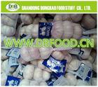 Factory supply New season High quality Fresh Garlic 5.5.0CM UP small mesh bag, in 10 kg carton