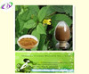 Natural Nettle Extract Powder Nettle Root Extract