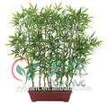 0124 baratos de china de árboles tropicales nombres
