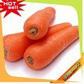 venta al por mayor 2014 chino el último nombre de verduras