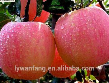 Fresh Apple Chinese Apple Fruit Gala Apple